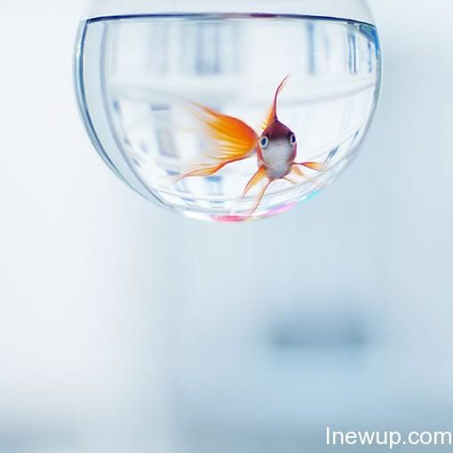 唯美图片:听说金鱼的记忆只有7秒| inewup.com